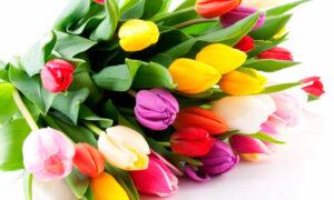 Зі святом весни, любі жінки!